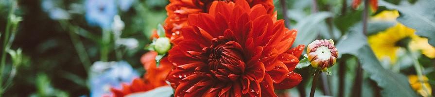 Voorjaar bloembollen