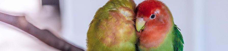 (Sier) vogel